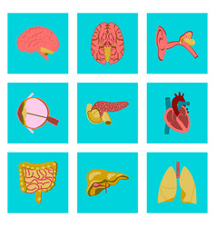 icons set in flat style human organs vector image