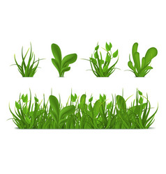 realistic 3d detailed green grass set vector image