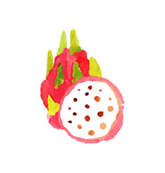 ripe dragon fruit watercolor hand painting vector image