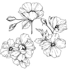 rosa canina flower black and white vector image