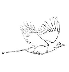 Crow in flight vector image