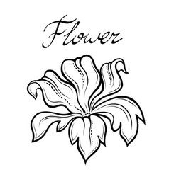 decorative summer flower linear vector image vector image