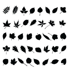 foliage vector image