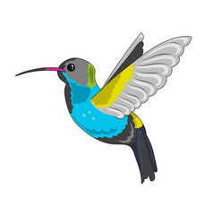 Humming bird icon vector