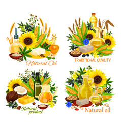 oil bottles with corn sunflower seed and olives vector image