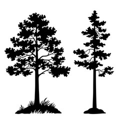 Pine trees black silhouette vector