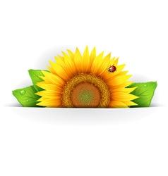 Banner floral background vector image
