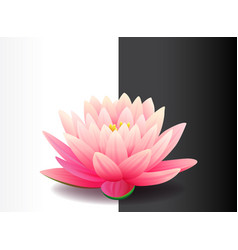 beautiful realistic pink lotus flower isolated on vector image