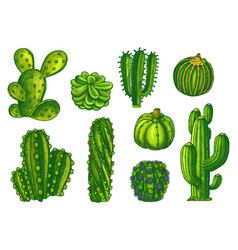 cactus and succulents agave sketch plants vector image