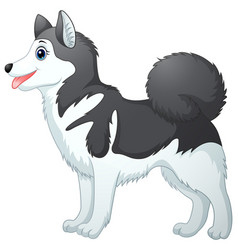 cartoon siberian husky vector image