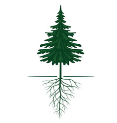 Green spruce tree with roots outline vector