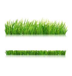 mowed green grass vector image