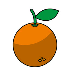 orange fruit isolated icon vector image vector image