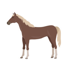 Sorrel horse in flat design vector