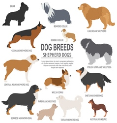 Dog breeds Shepherd dog set icon Flat style vector