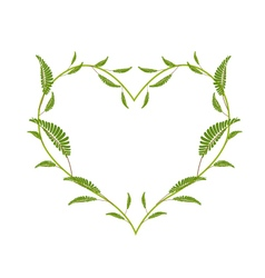 Green Leafy Leaves in A Heart Shape vector