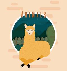 Llama cute animal card vector
