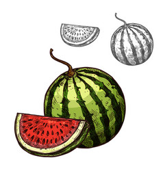 Watermelon sketch fruit cut section icon vector