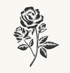 Black hand drawn roses engraving vector