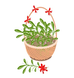 A Brown Basket of Mistletoe with Red Bow vector image