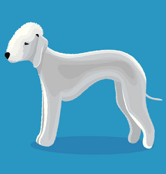 Bedlington terrier dog vector