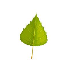 Birch leaf icon cartoon foliage sign vector