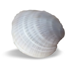 clam on a white background vector image