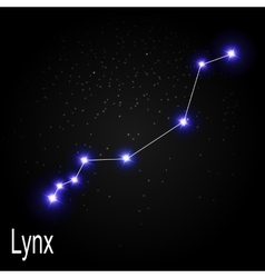 Lynx Constellation with Beautiful Bright Stars on vector image