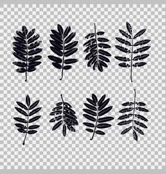set leaves rowan graphics vector image