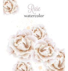 watercolor white roses isolated beautiful vector image