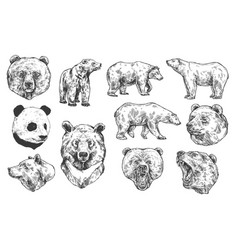 Bear grizzly and panda sketches vector