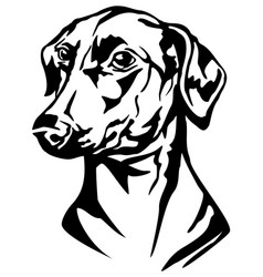 Decorative portrait dog german pinscher vector