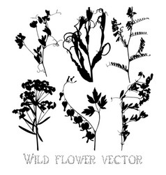 Silhouettes of wild flowers and leaves vector image