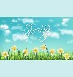 spring card narcissus flower fields and blue sky vector image