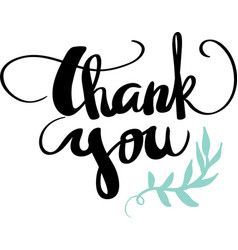 thank you calligraphy design vector image