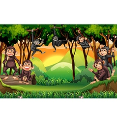 Monkeys climbing tree in the jungle vector image vector image