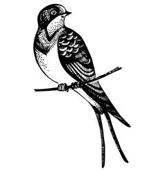 Swallow bird vector image