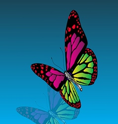 Beautiful colored butterfly with reflection the vector image