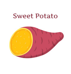 brown batat sweet potatoorganic health vegetable vector image