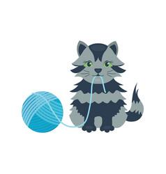 Cat breed cute kitten gray pet portrait fluffy vector