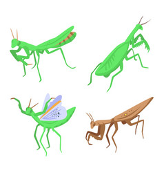 Mantis icons set isometric style vector