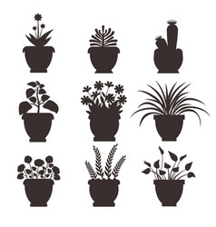 ophiopogon set silhouette vector image