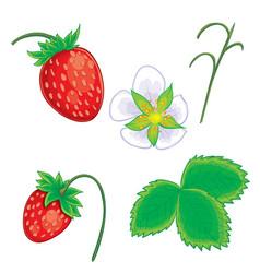 set wild strawberries from berries flower vector image