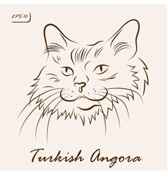 Turkish Angora cat vector