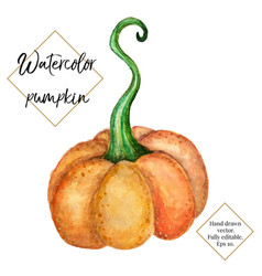 Watercolor pumpkin isolated on white vector