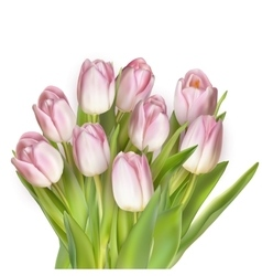 Bouquet of pink tulips EPS 10 vector image vector image