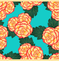 begonia flower picotee sunburst on blue teal vector image
