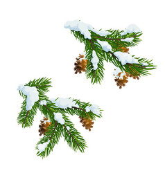 Christmas pine and fir branches in snow vector