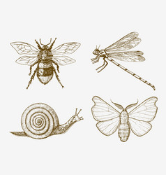 snail bee dragonfly butterfly insects bugs vector image