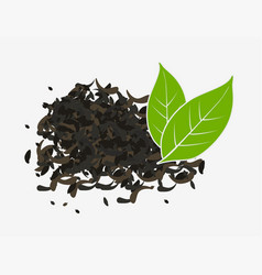 tea dry and fresh green leaves isolated vector image